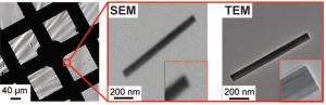 Correlated SEM and TEM imaging